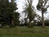 7.4 acres @ 390 Wood Rd., New Holland $69,900
