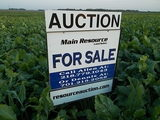 LAND FOR SALE BY AUCTION