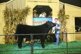 Arkansas State Fair Livestock Premium Auction