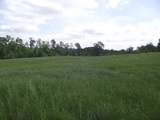 FOR SALE 11 +/- Acres Glenwood, AR