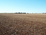 12/19 140± ACRES CROPLAND/GRASS PASTURE