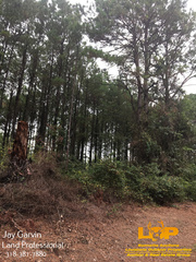 LAND FOR SALE IN CHOUDRANT, LA