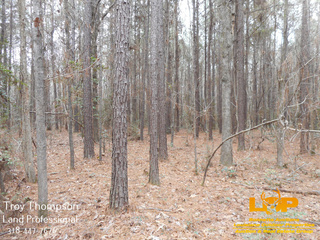Land For Sale in Olla, LA