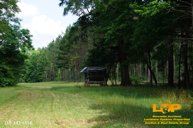 Wilkinson County, MS Timberland For Sale at Auction