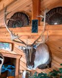 FIREARMS, MOUNTS & HUNTING EQUIPMENT  FROM THE STEVE PUPPE ESTATE