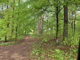 Pine Thicket and Hwy 31E