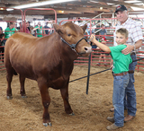 Delaware County 4-H Online Only Livestock Auction