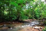 FOR SALE by Realtor - Hungards Creek Forest in Talcott WV