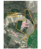 Land Auction - 262+/- Acres in Three Tracts