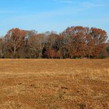 Tate Co. - Senatobia - 44.40 acre Home Site - Pasture Land - Rolling Hills - Pond
