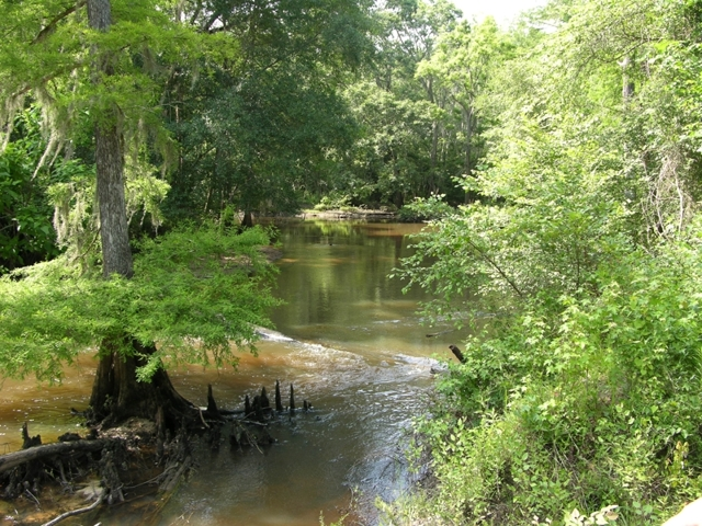 50 Acres On Muckalee Creek Graves Springs Rd Leesburg
