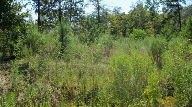 Lot 6 springhill loop grant parish louisiana outdoor for Build on your lot louisiana