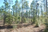 1063 Acres Jackson County Florida