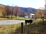 850 Acre Monroe Co. WV Farm