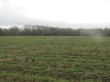 113 Acres,Marianna FL