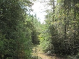 327 +/- ACRES OF TIMBERLAND FOR SALE IN JEFF DAVIS