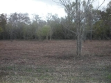 3 WATERFRONT LOTS NEAR MARKSVILLE, LA