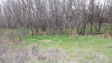 70± ACRES GRANT COUNTY, OK * EXCELLENT HUNTING PROPERTY