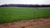 155± IRRIGATABLE ACRES * BRICK HOME *RESIDENTIAL LOTS