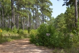 The Dale Tract 960 +/- ac. of timberland in Natchitoches Parish