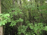 3500+/- acres of timberland near French Settlement