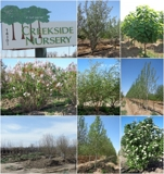 Complete & Total Colorado Nursery Liquidation