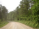 41 ACRES WITH LARGE TIMBER