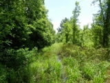 40 Acres near Sandy Lake Area in Catahoula Parish