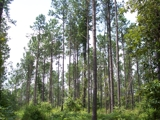 1391± TOTAL ACRES - EARLY COUNTY(BLAKELY), GEORGIA
