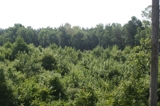 32+/- Acres Secluded Woodland
