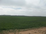 156 +/- ACRES TILLABLE IN KINGMAN COUNTY KS