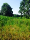 30+/- Acres 45 minutes North of Lafayette For Sale