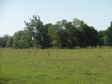 289 +/- acres near Opelousas