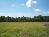 PROPERTY #4 - 412± TOTAL ACRES - BARBOUR COUNTY (BAKERHILL), ALABAMA