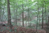 Land Auction - 23± Wooded Acres