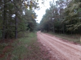 Louisiana Deer Hunting Property For Sale at Auction