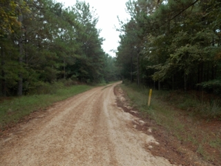 Mississippi Deer Hunting Property For Sale - Louisiana Outdoor