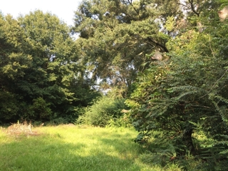 6830 Pine Forest Rd Vacant Land