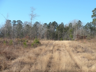 Forest Hill, LA Hunting Land For Sale