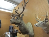 DOUG'S AUCTION IN UTAH-Weekly Consignment