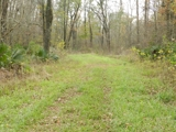95 acres in Southern Avoyelles Parish For Sale