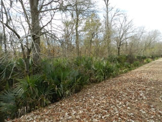 80 acres in Southern Avoyelles Parish For Sale