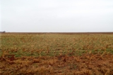 3/5 - 80± ACRES * GARFIELD COUNTY, OK. * MINERALS