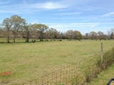 PROPERTY #2 - 185± TOTAL ACRES - RANDOLPH COUNTY, GA