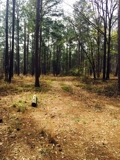 PROPERTY#4 - 157± ACRES - RANDOLPH COUNTY, GA