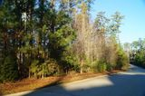 Auction: Timberlake S/D Lot featuring 0.43 Acres