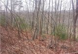 Auction: 1.04 Ac Wooded Lot in Waterford Lakes S/D