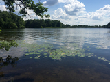 Beautiful, Wooded Waterfront Lot on Rice Lake