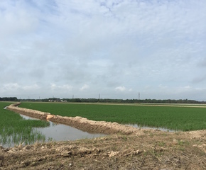 Rice Farmland For Sale in Louisiana