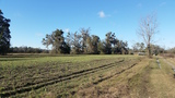 10 acres & 38+ acres in Worthington Springs